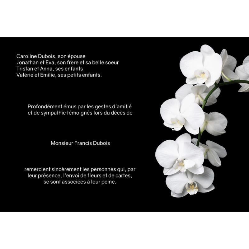 Cascade d'orchidée