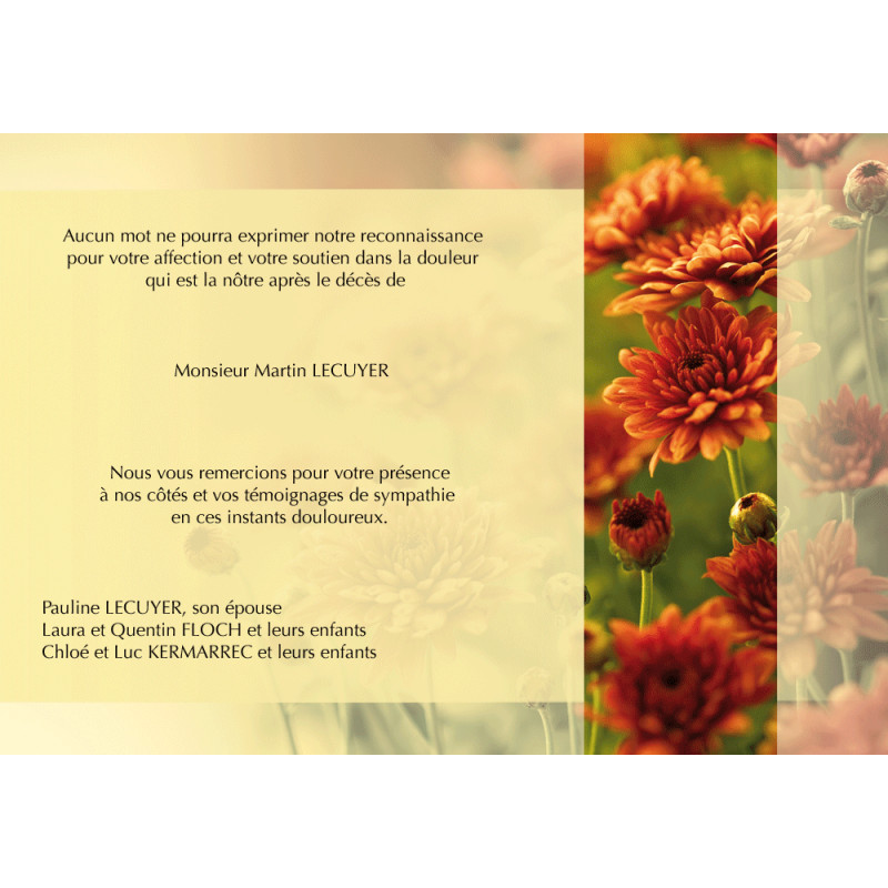 Chrysanthèmes fleuris