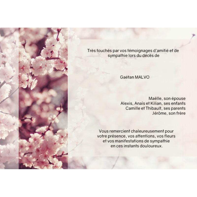 Douceur du Sakura