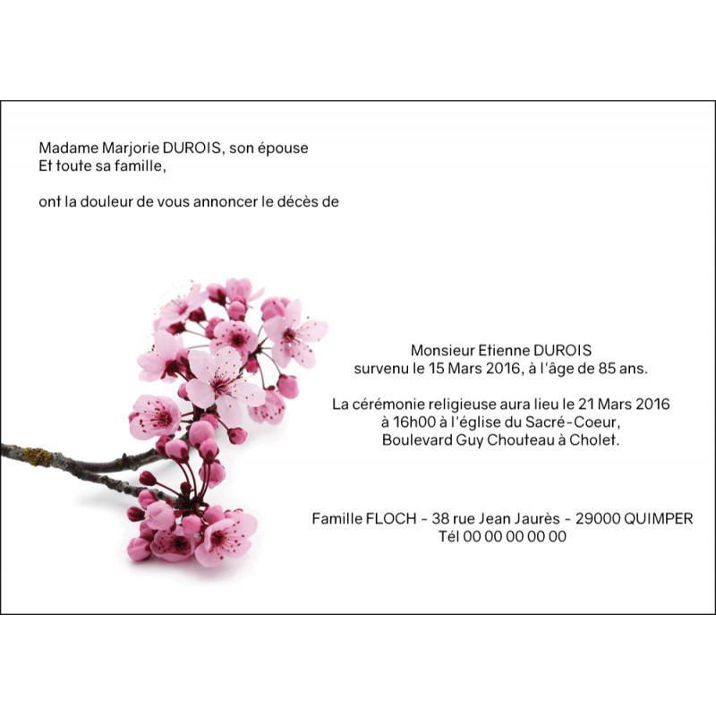 Hanami, le temps des cerisiers